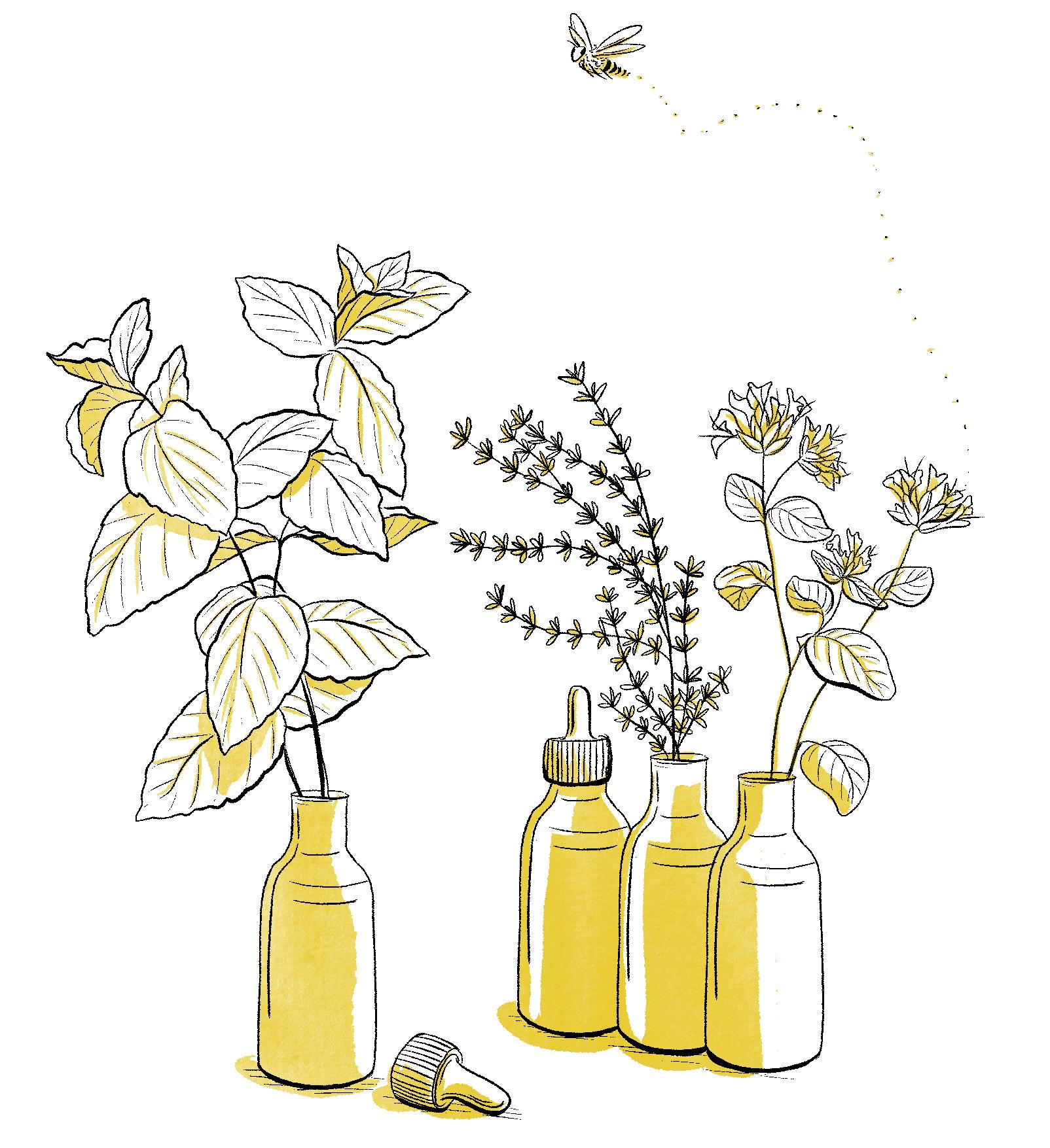 Illu4 clef des champs melika illustration